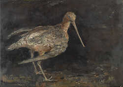 Bar-Tailed Godwit on Lacquer