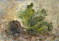 Cabbage and root