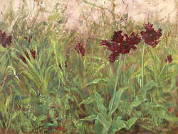 Dark Tulips in Grass
