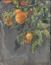 Seville Oranges on Slate