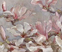 Study of Magnolia Flowers