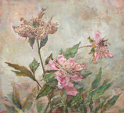 Three Old Peonies
